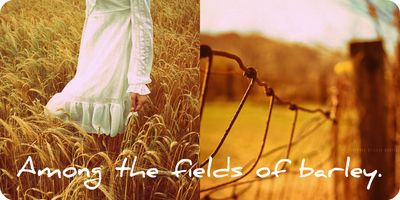 FieldsOfGoldCollage2