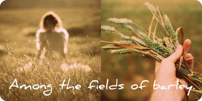 FieldsOfGoldCollage6